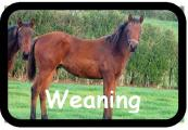 Weaning1